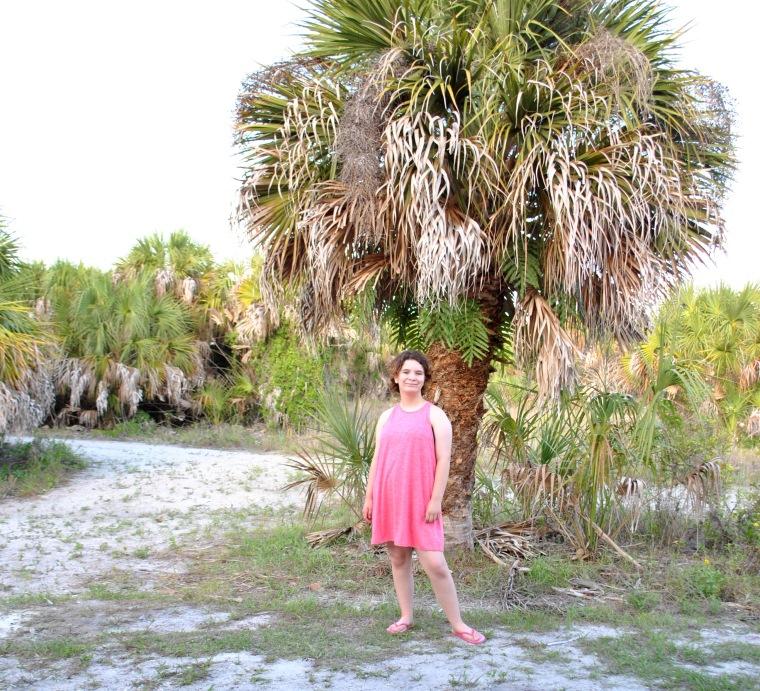 lilli park palm 2