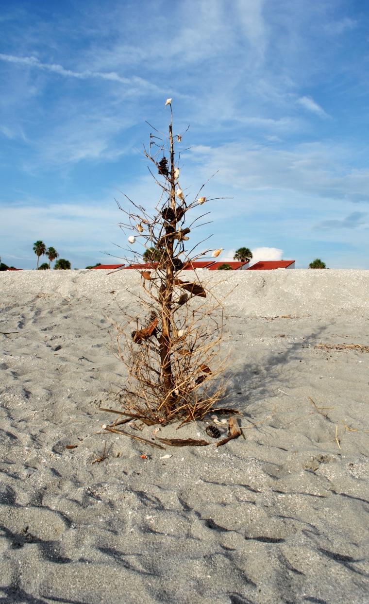 beach christmas.jpg